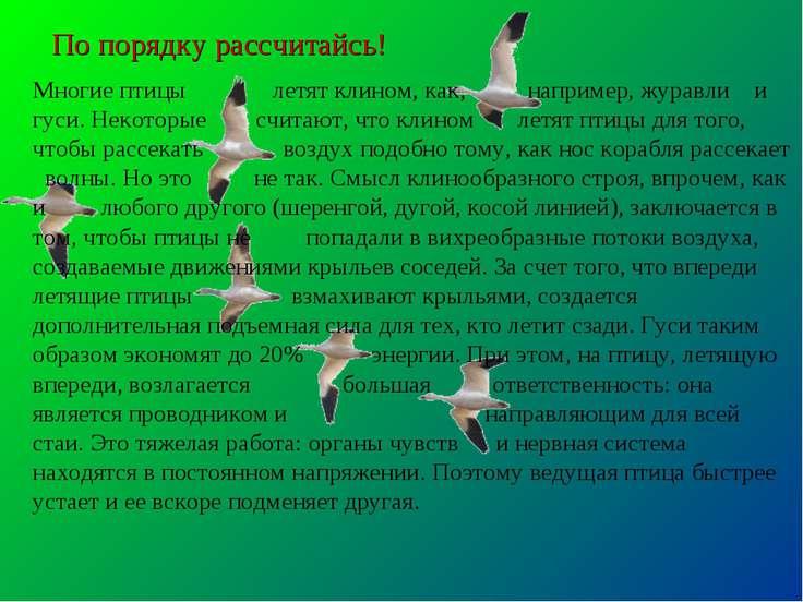По порядку рассчитайсь! Многие птицы летят клином, как, например, журавли и г...