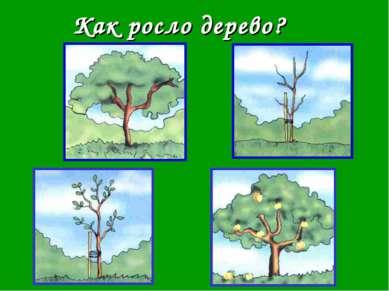 Как росло дерево?