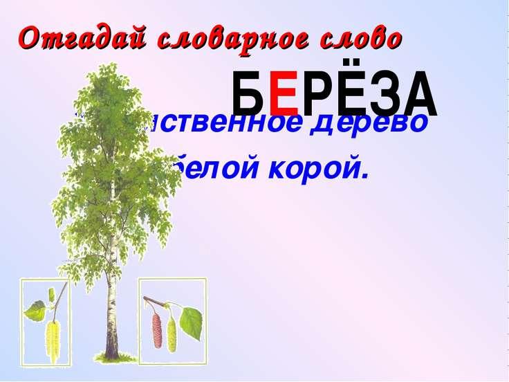 Лиственное дерево с белой корой. Отгадай словарное слово БЕРЁЗА