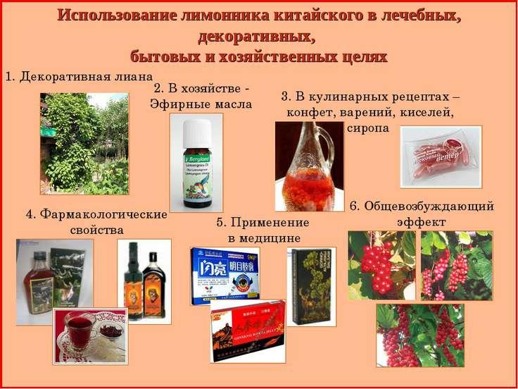 Использование лимонника китайского в лечебных, декоративных, бытовых и хозяйс...