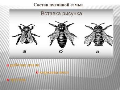а рабочая пчела б королева пчел в трутень Состав пчелиной семьи