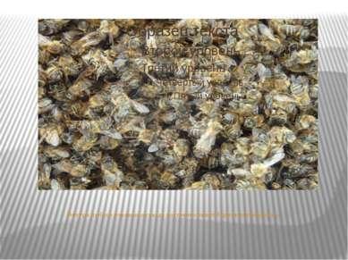 Внутри любого пчелиного гнезда постоянно кипит бурная деятельность