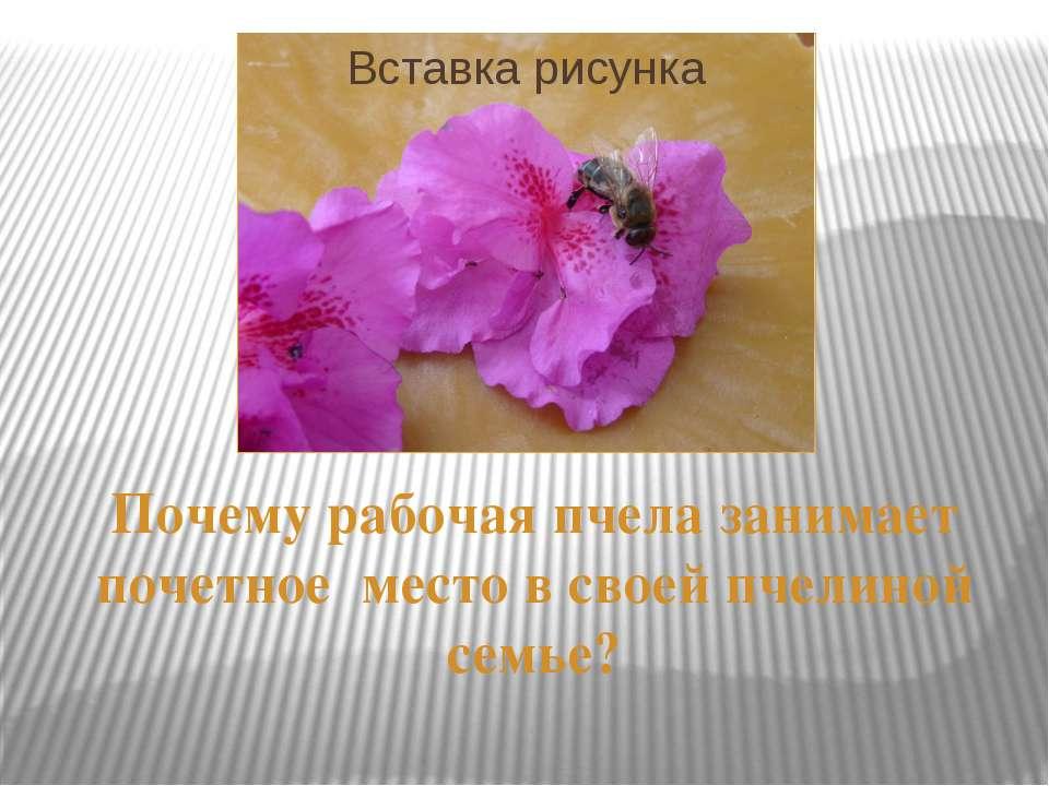 Почему рабочая пчела занимает почетное место в своей пчелиной семье?