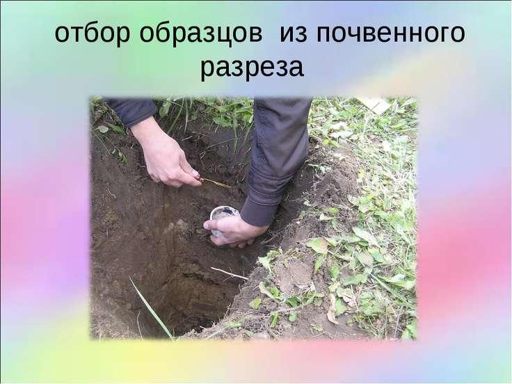 отбор образцов из почвенного разреза