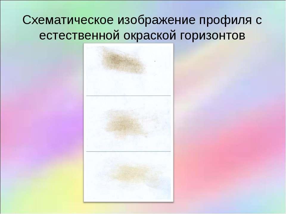 Схематическое изображение профиля с естественной окраской горизонтов