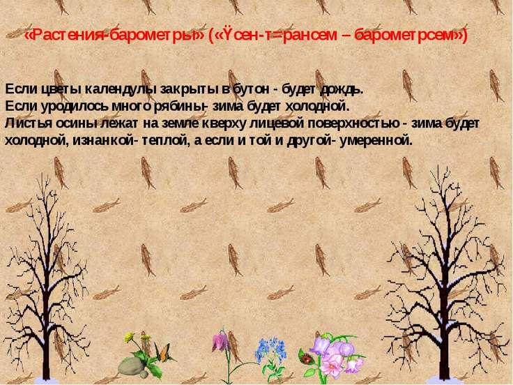 «Растения-барометры» («Ÿсен-т=рансем – барометрсем») Если цветы календулы зак...