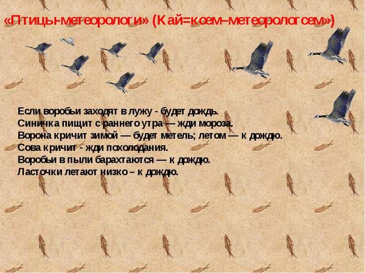 «Птицы-метеорологи» (Кай=ксем–метеорологсем») Если воробьи заходят в лужу - б...