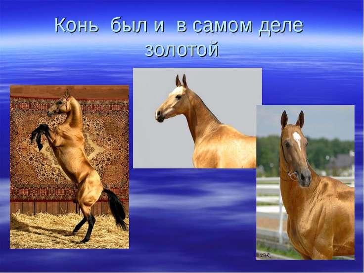 Конь был и в самом деле золотой