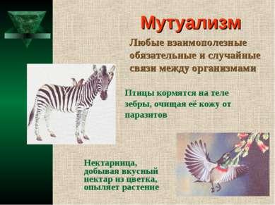 Мутуализм Любые взаимополезные обязательные и случайные связи между организма...