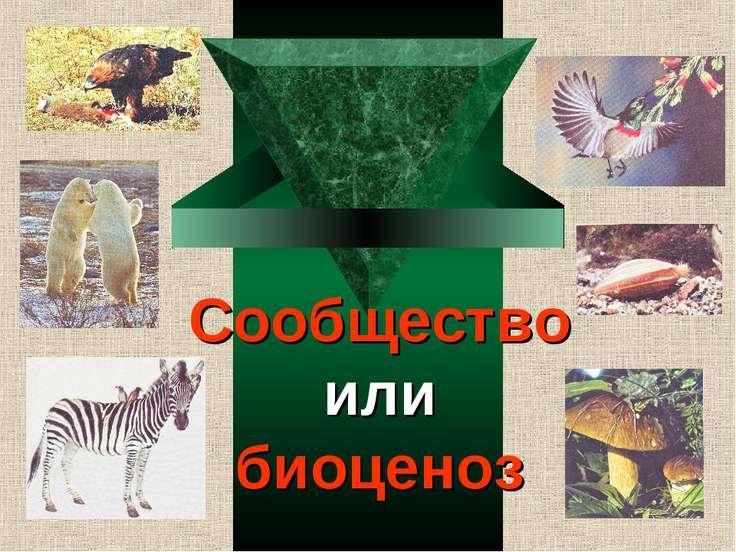 Сообщество или биоценоз