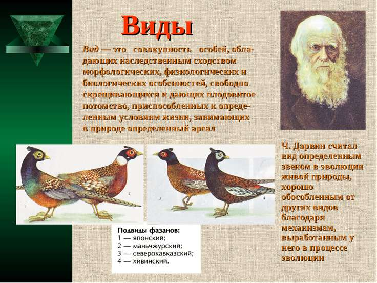 Виды Ч. Дарвин считал вид определенным звеном в эволюции живой природы, хорош...