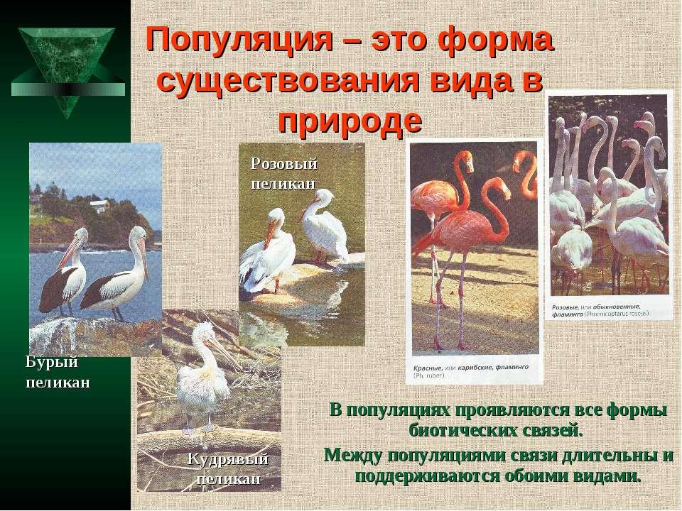 Популяция – это форма существования вида в природе В популяциях проявляются в...