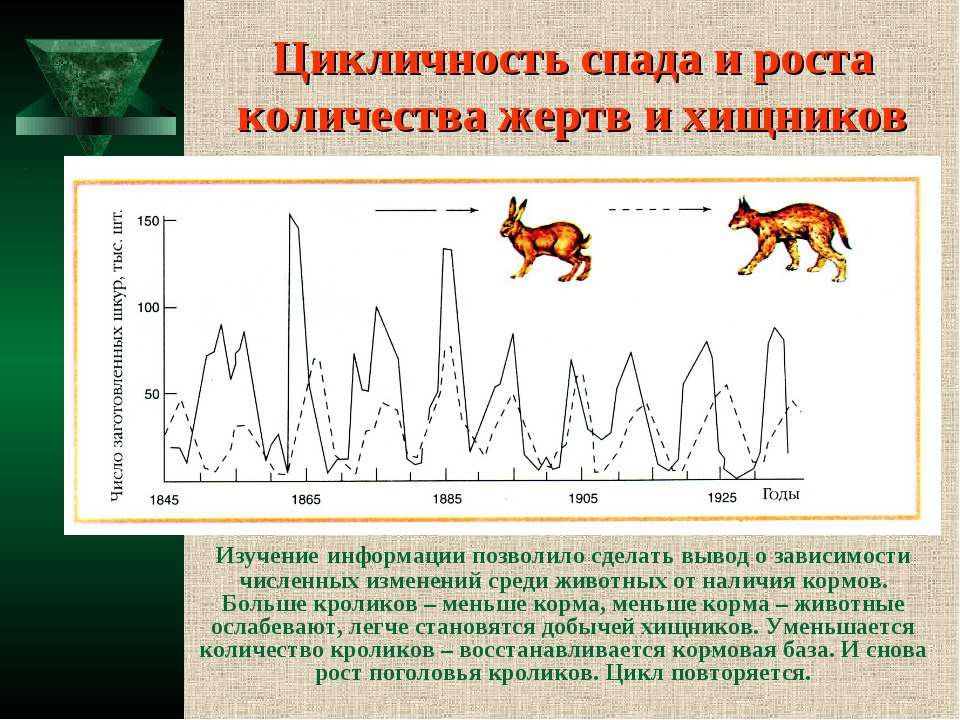 Цикличность спада и роста количества жертв и хищников Изучение информации поз...