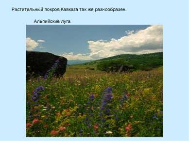 Растительный покров Кавказа так же разнообразен. Альпийские луга