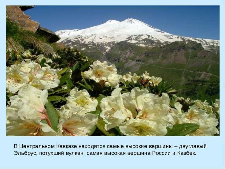 В Центральном Кавказе находятся самые высокие вершины – двуглавый Эльбрус, по...