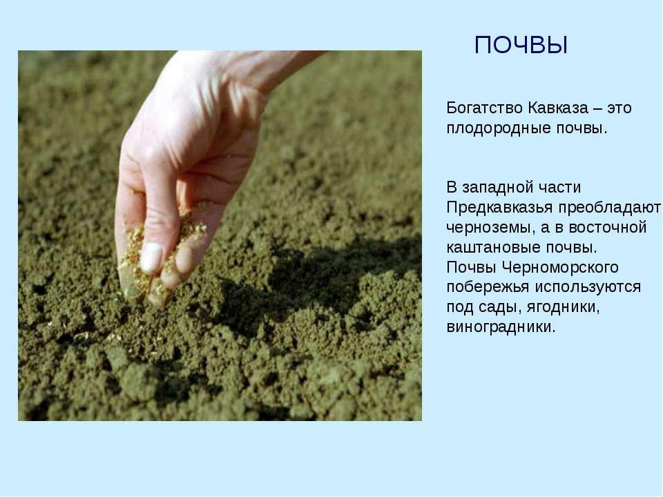 ПОЧВЫ Богатство Кавказа – это плодородные почвы. В западной части Предкавказь...