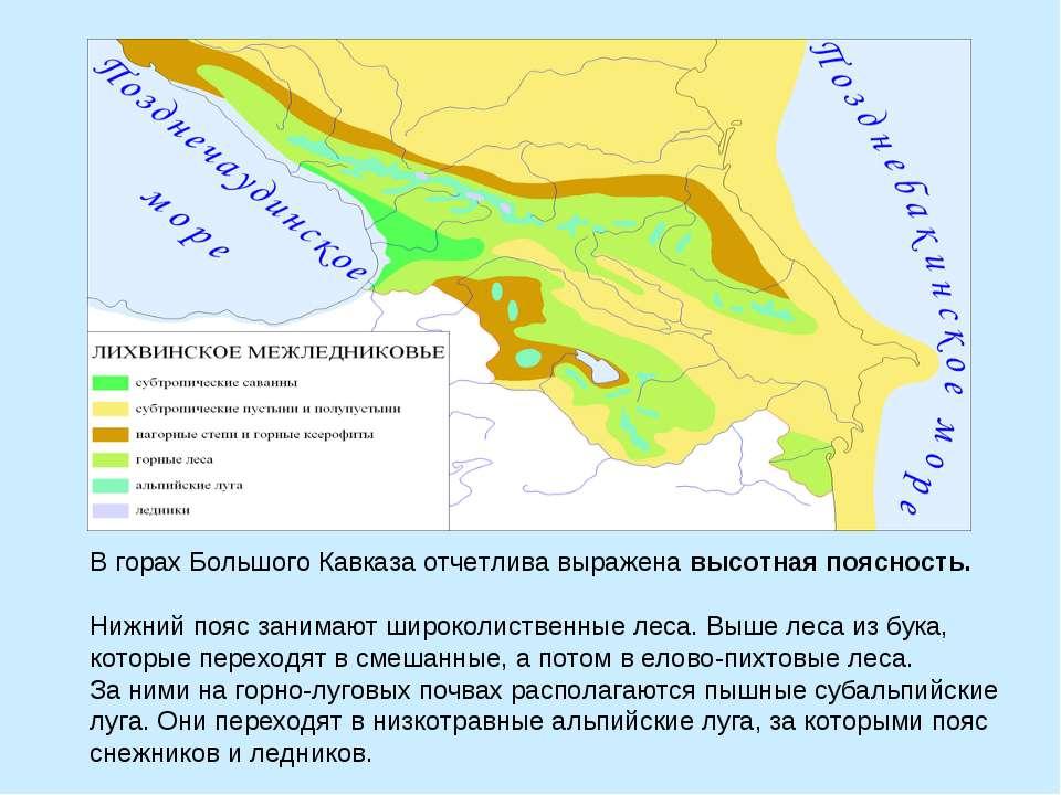 В горах Большого Кавказа отчетлива выражена высотная поясность. Нижний пояс з...