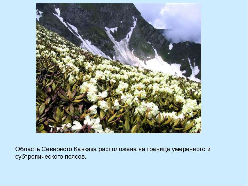 Область Северного Кавказа расположена на границе умеренного и субтропического...
