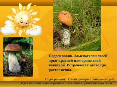 Подберезовик . Очень распространенный гриб. Цвет шляпки бывает разный : от те...
