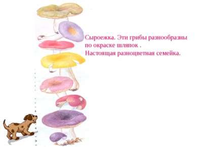 Сыроежка. Эти грибы разнообразны по окраске шляпок . Настоящая разноцветная с...