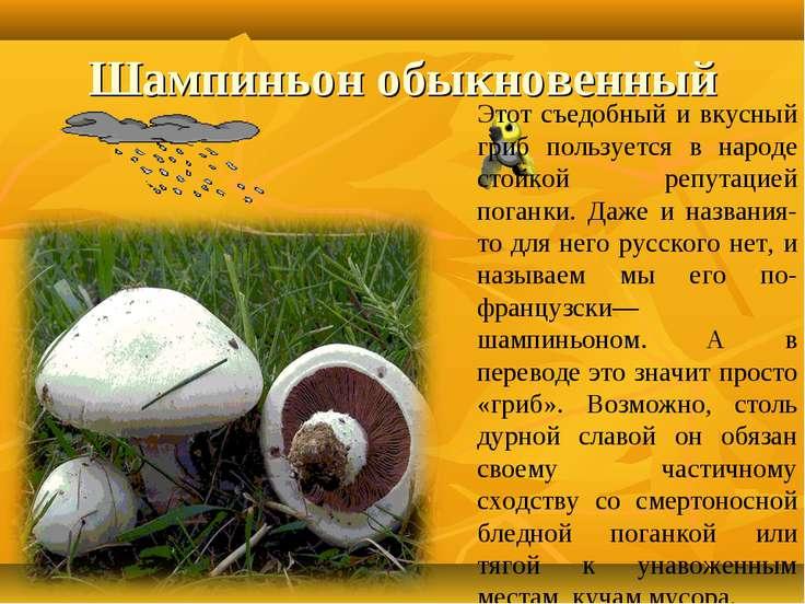 Шампиньон обыкновенный Этот съедобный и вкусный гриб пользуется в народе стой...