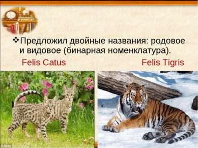 Предложил двойные названия: родовое и видовое (бинарная номенклатура). Felis ...