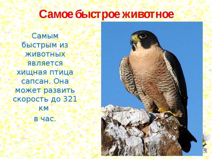 Самое быстрое животное Самым быстрым из животных является хищная птица сапсан...