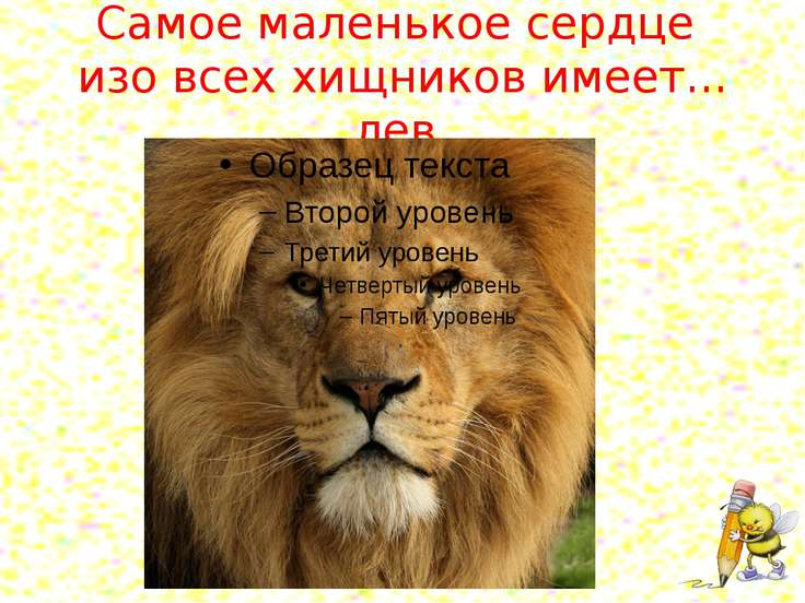 Самое маленькое сердце изо всех хищников имеет... лев.