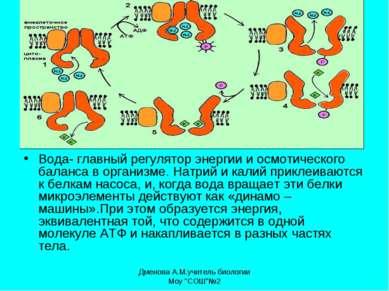 Вода- главный регулятор энергии и осмотического баланса в организме. Натрий и...
