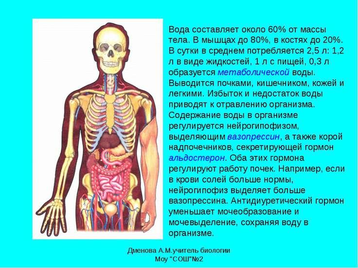 Вода составляет около 60% от массы тела. В мышцах до 80%, в костях до 20%. В ...