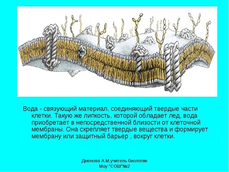 Вода - связующий материал, соединяющий твердые части клетки. Такую же липкост...