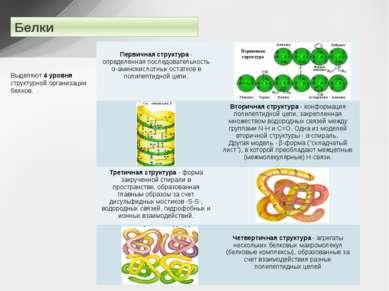 Белки Выделяют 4 уровня структурной организации белков. Первичная структура- ...