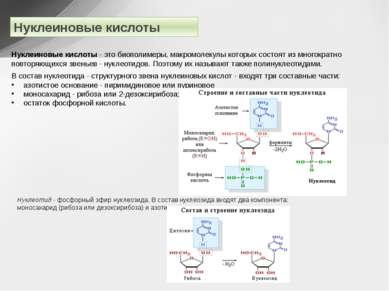 Нуклеиновые кислоты Нуклеиновые кислоты - это биополимеры, макромолекулы кото...