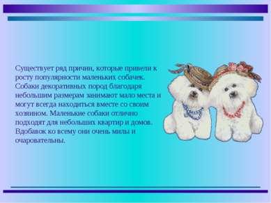 Существует ряд причин, которые привели к росту популярности маленьких собачек...
