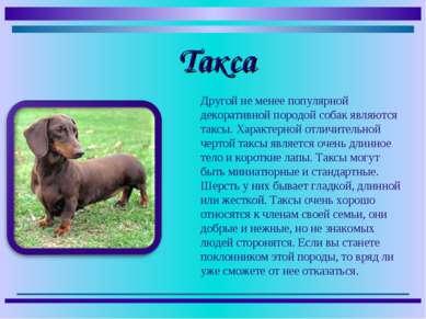 Другой не менее популярной декоративной породой собак являются таксы. Характе...