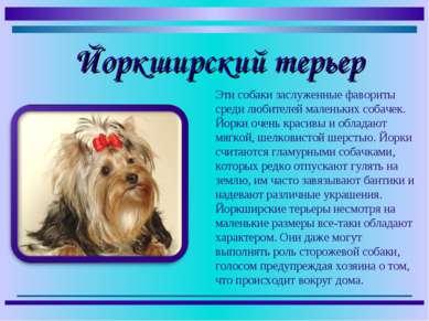 Эти собаки заслуженные фавориты среди любителей маленьких собачек. Йорки очен...