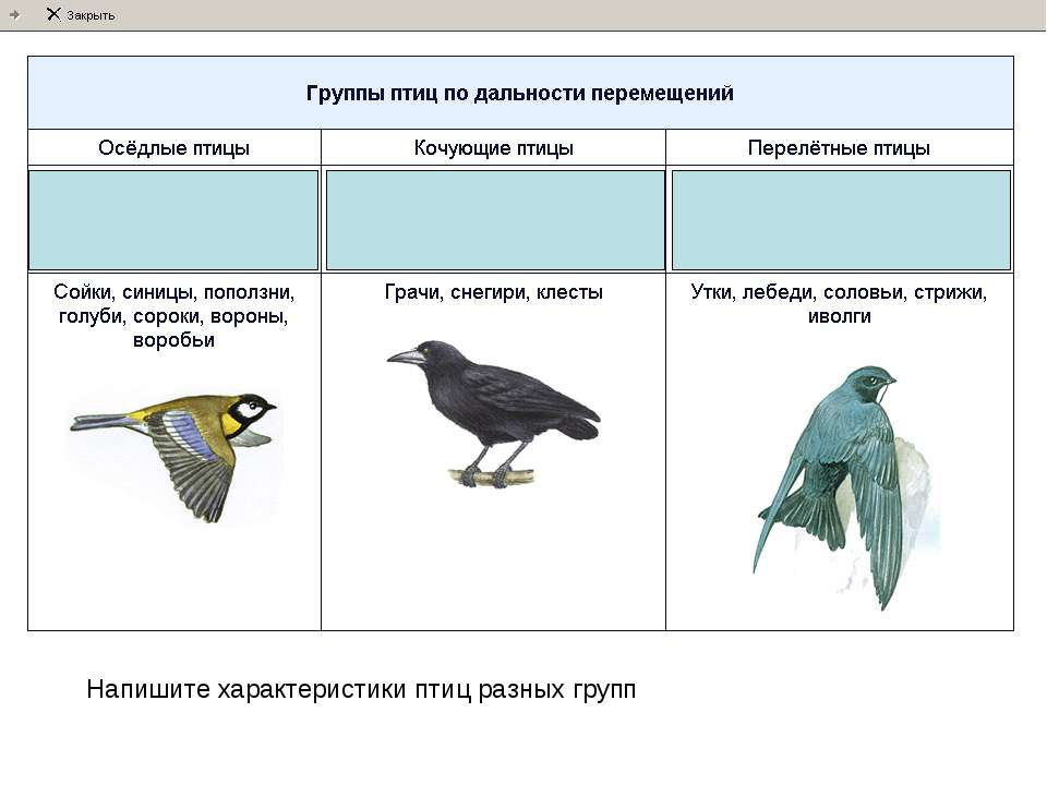 Напишите характеристики птиц разных групп