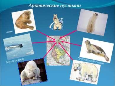 Арктические пустыни морж Белый медведь Гренландский тюлень