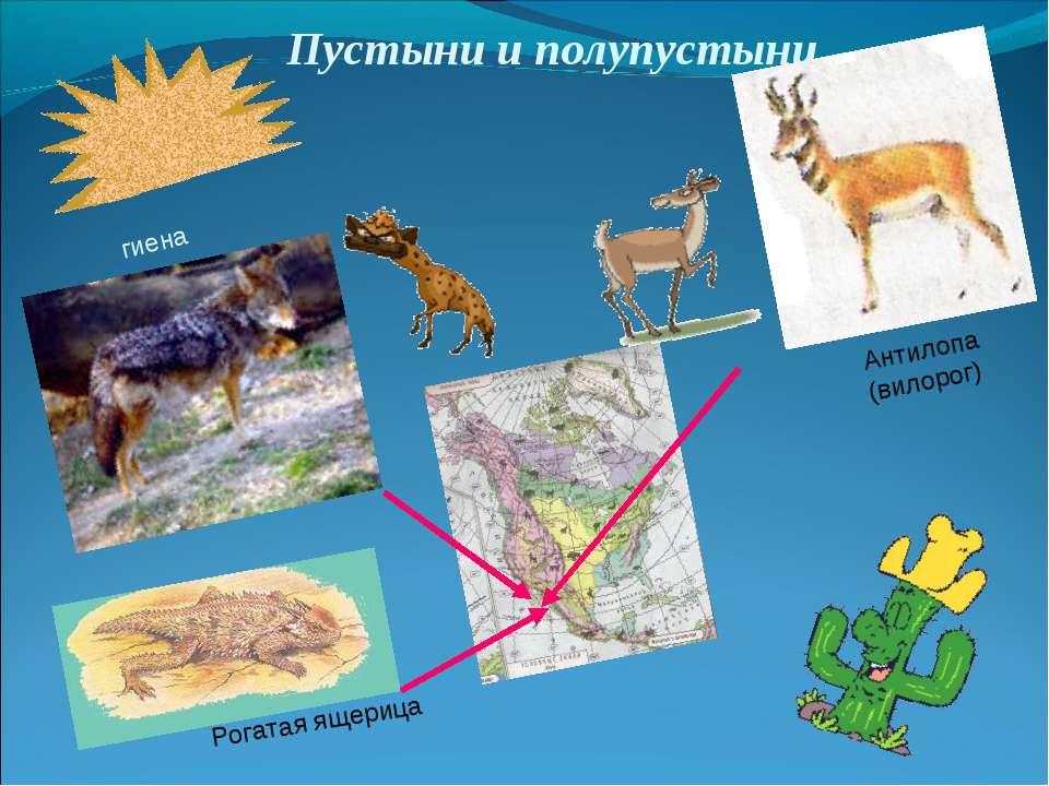 Пустыни и полупустыни гиена Рогатая ящерица Антилопа (вилорог)