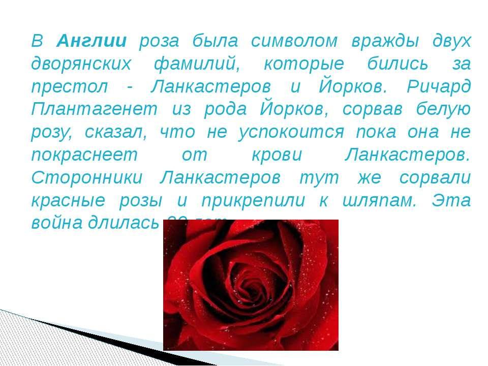 В Англии роза была символом вражды двух дворянских фамилий, которые бились за...