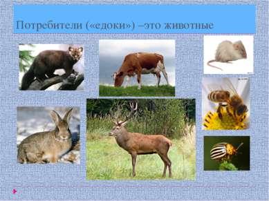 Потребители («едоки») –это животные
