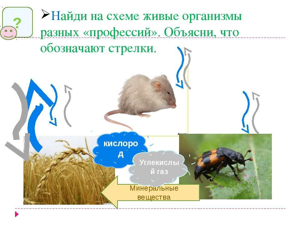 Найди на схеме живые организмы разных «профессий». Объясни, что обозначают ст...