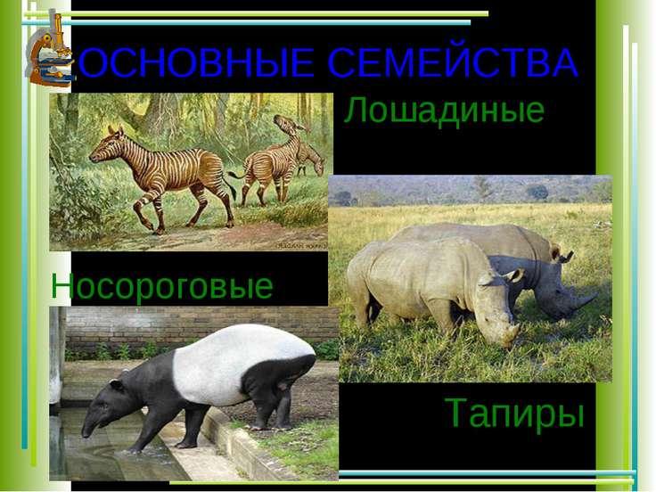 ОСНОВНЫЕ СЕМЕЙСТВА Носороговые Тапиры Лошадиные