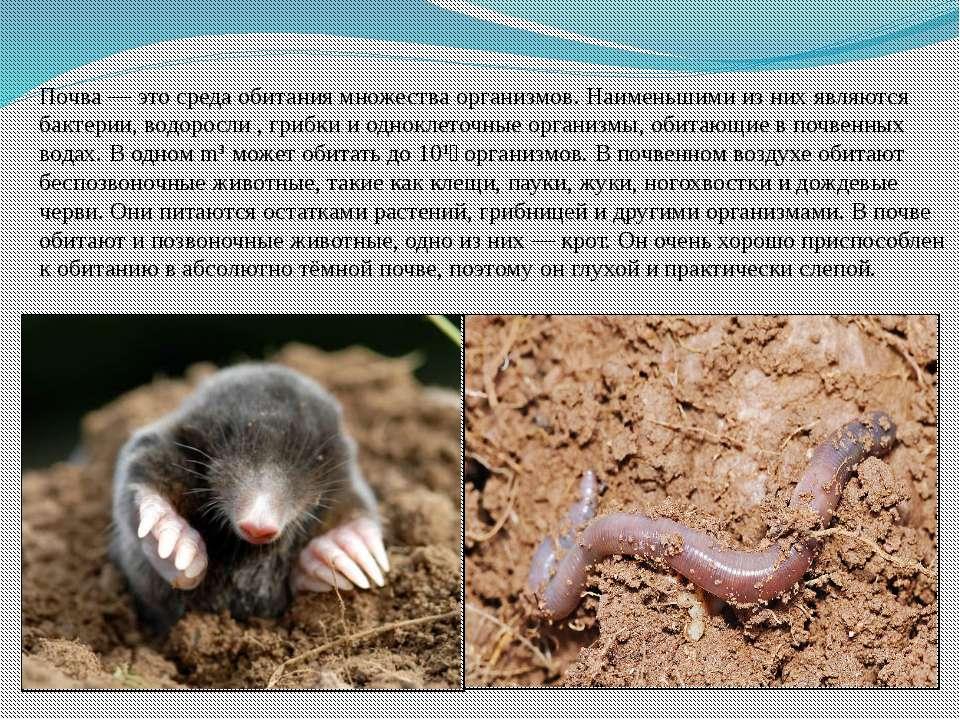 Почва — это среда обитания множества организмов. Наименьшими из них являются ...