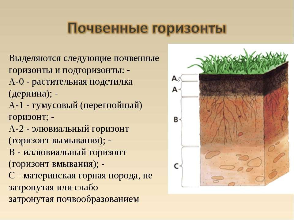Выделяются следующие почвенные горизонты и подгоризонты: - A-0 - растительная...