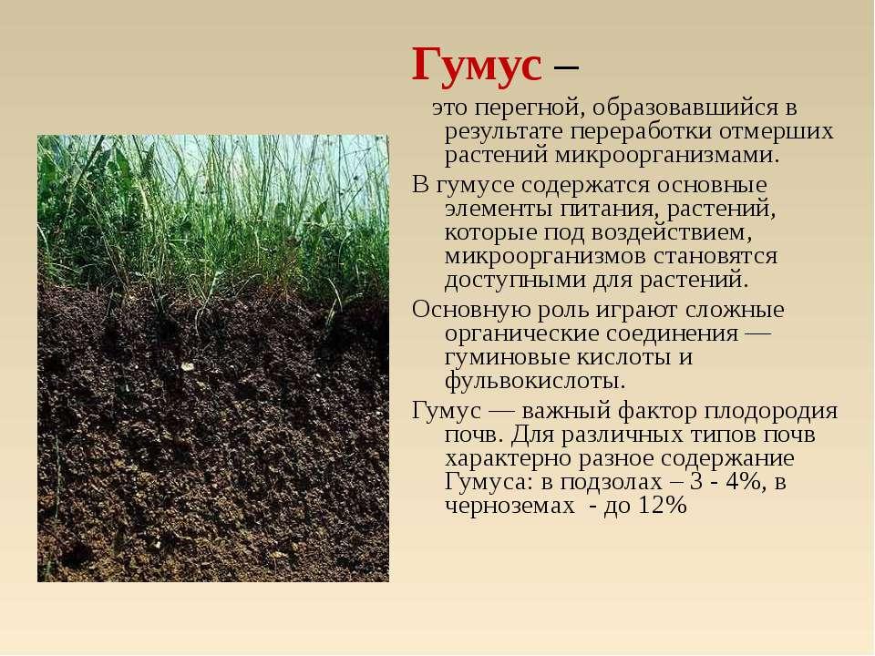 Гумус – это перегной, образовавшийся в результате переработки отмерших растен...