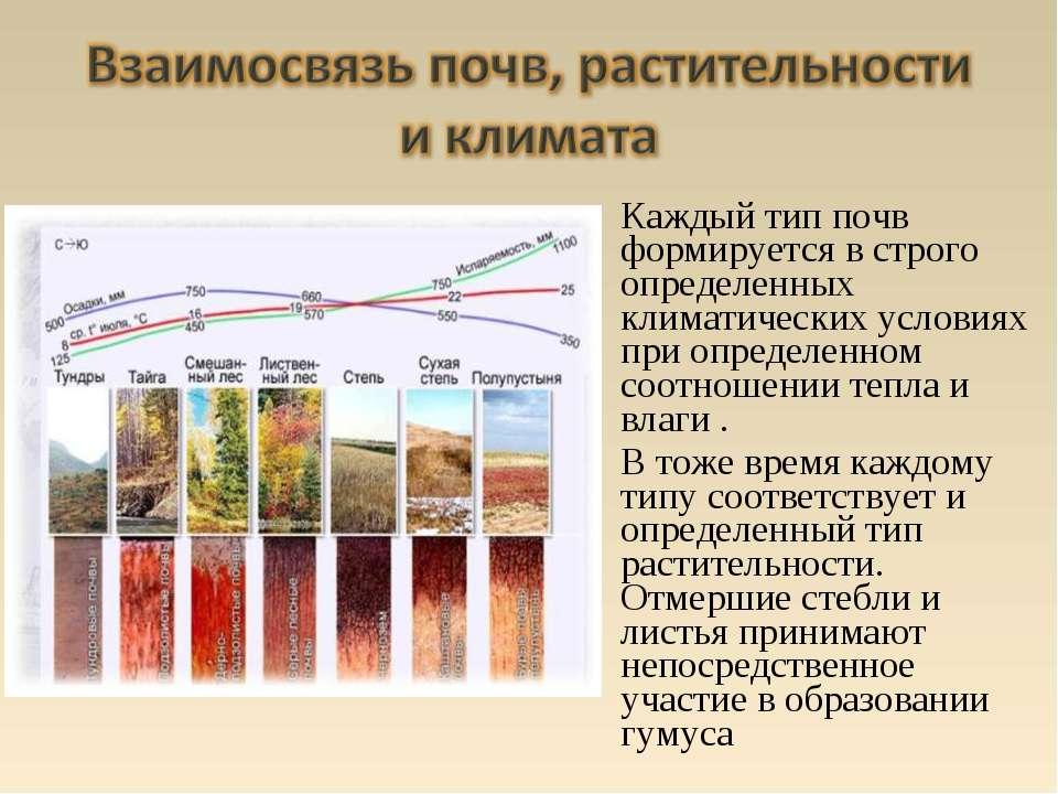 Каждый тип почв формируется в строго определенных климатических условиях при ...