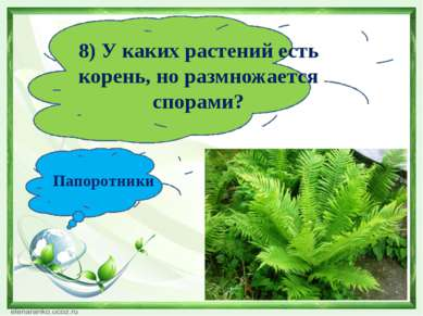 8) У каких растений есть корень, но размножается спорами? Папоротники