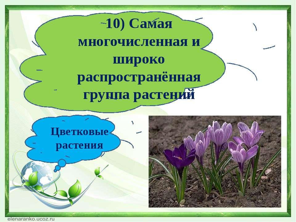 10) Самая многочисленная и широко распространённая группа растений Цветковые ...