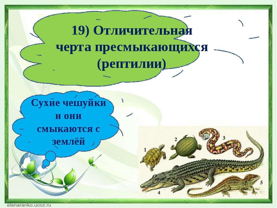 19) Отличительная черта пресмыкающихся (рептилии) Сухие чешуйки и они смыкают...
